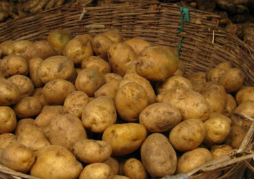 potato_PNG5148